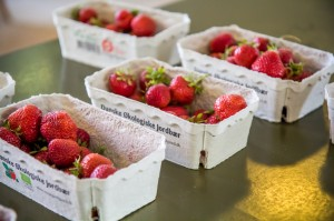The food-organic strawberries
