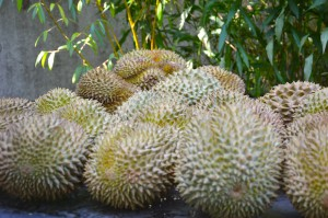 DSC_9723_2 durian_2 lille