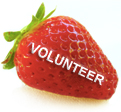 Strawberry volunteer